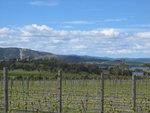 Mt Wellington vineyard
