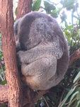 Taronga Zoo 2