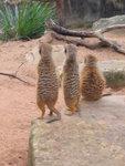 Taronga Zoo 6