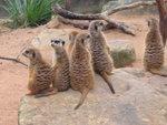 Taronga Zoo 7