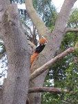 Taronga Zoo 8