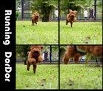 running dordor