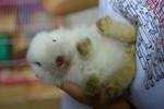 Rabbit BB @ Q Rabbits shop