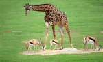 Company with Giraffe