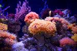 Aquarium Star