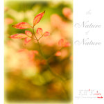 nature0002