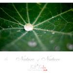 nature0008