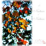 nature0010