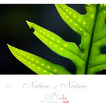 nature0012