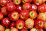 DSC_0023_fruit_word