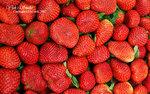 DSC_0025_fruit_word