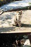 DSC_7155_cat_R_icon