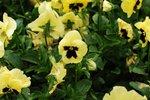 23032010_Flower Show00001