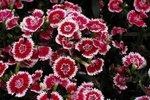 23032010_Flower Show00002