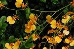 23032010_Flower Show00004