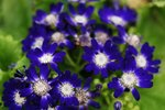 23032010_Flower Show00006