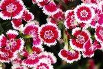 23032010_Flower Show00007