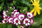 23032010_Flower Show00008
