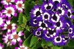 23032010_Flower Show00009