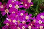 23032010_Flower Show00011