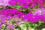 23032010_Flower Show00014