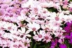 23032010_Flower Show00019