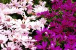 23032010_Flower Show00020
