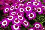 23032010_Flower Show00021