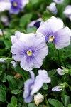 23032010_Flower Show00022