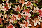 23032010_Flower Show00025