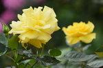 18032014_Sun Lai Garden Flower00015