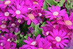 14022015_Lunar New Year Flower Fair Snapshots_���00007