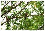 15042018_Lingnan Garden00001
