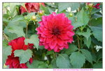 02022019_Sony A7 II_Lunar New Year Flower Fair at Kwai Fong Park00030