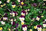 21032008_Flower Show00025