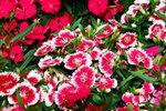 21032008_Flower Show00024