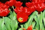 21032008_Flower Show00022