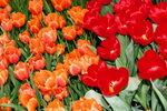 21032008_Flower Show00017