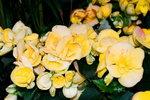 21032008_Flower Show00015