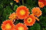 21032008_Flower Show00014