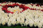 21032008_Flower Show00010