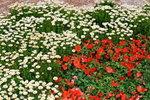 21032008_Flower Show00008