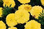 21032008_Flower Show00007