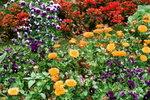 21032008_Flower Show00005