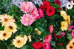 21032008_Flower Show00001