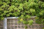 18092010_Scenic of Lingnan Garden00023