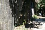 27112011_Mount Davis Snapshots00004