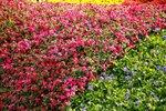 19032015_Hong Kong Flower Show_Venue00001