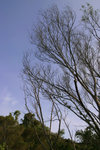 IMG_1789_a