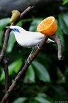 P6237542-bird-aa